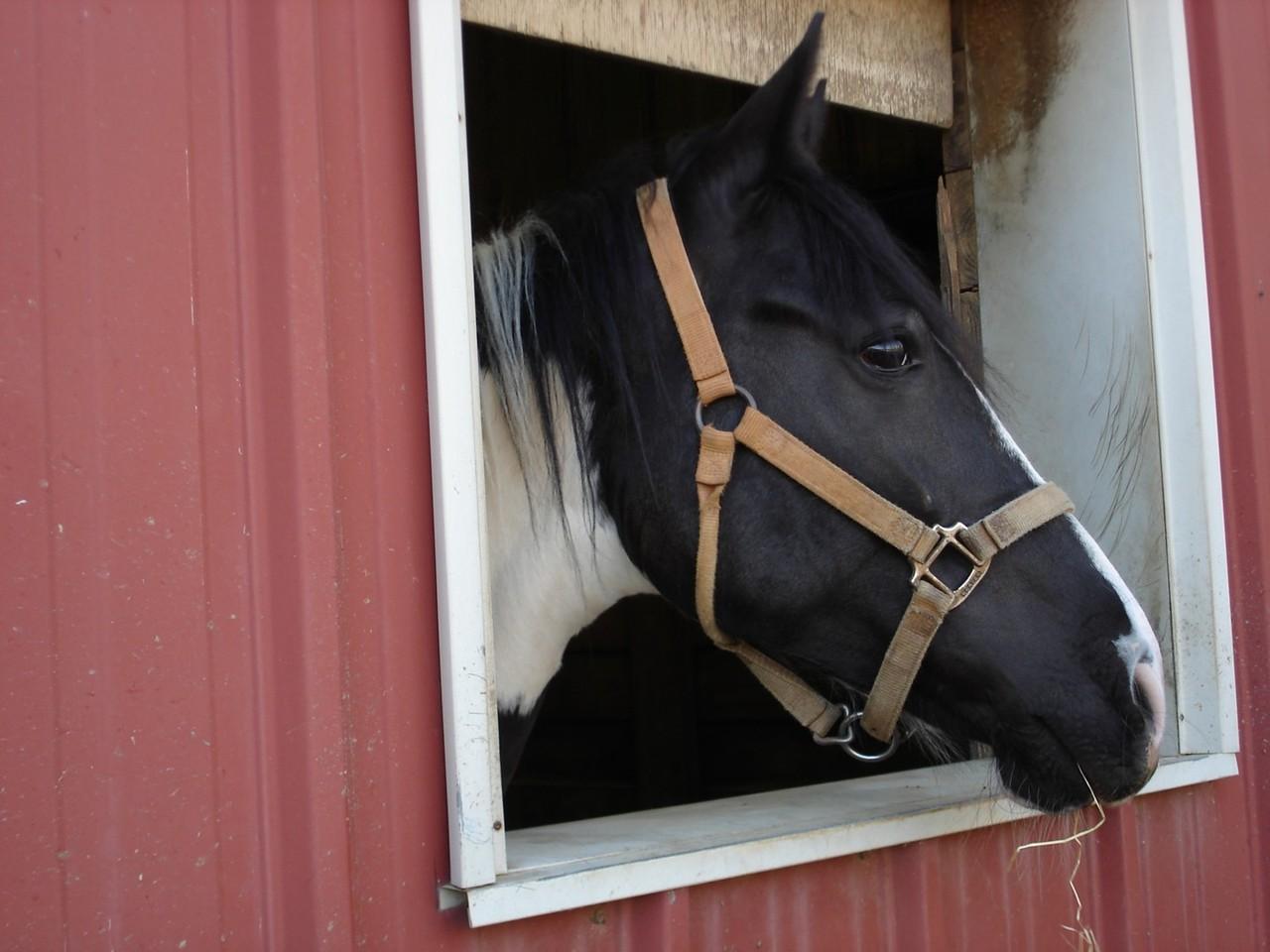Kiedy wybrać owijki dla konia